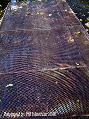 Metal Grate Farm Equipment (phil_sidenstricker) Tags: leaves grate steel used equipment weathered abused metalgrate donotcopy valleyofthesunphoenixmetro upcoming:event=981998 southmountainfarmphoenixazusa