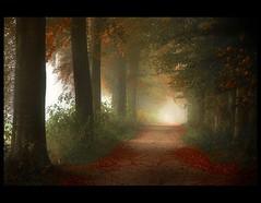 All Hallows Day (♥ Damona-Art •.¸¸.•´¯`•.♥.•´¯`) Tags: autumn trees light fall leaves misty fog frames woods nikon shadows belgium explore paths forests coolshot 18200vr 1onexplore impressedbeauty theperfectphotographer thesecretlifeoftrees megatopofthefog thetempleofaphrodite hallowsday