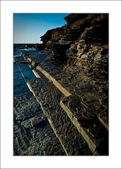 (The Sage of Shadowdale) Tags: d50 marine australia nsw aquatic 1855mmf3556g warriewood turimetta