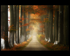 The secret Path toThalimea ( Damona-Art ..`..`) Tags: autumn trees mist fall colors leaves lines souls leuven fog frames woods nikon bravo raw searchthebest belgium path secret dream explore forests mystic enchanted d300 infinestyle thesecretlifeoftrees thalimea imagicland