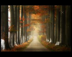 The secret Path toThalimea ( Damona-Art ..`..`) Tags: autumn trees mist fall colors leaves lines souls leuven fog frames woods nikon bravo raw searchthebest belgium path secret dream explore forests mystic enchanted d300 infinestyle thesecretlifeoftrees thalimea imagicland