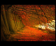 Rouge (♥ Damona-Art •.¸¸.•´¯`•.♥.•´¯`) Tags: park autumn trees red lake fall texture nature colors leaves rouge photography frames nikon raw belgium belgique explore hidden tervuren 5star d300 coolshot infinestyle thesecretlifeoftrees