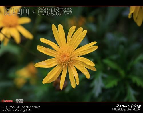 你拍攝的 20081116數位攝影_阿里山之旅296.jpg。
