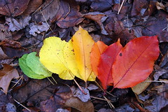 """The colors of fall • <a style=""""font-size:0.8em;"""" href=""""http://www.flickr.com/photos/7358896@N06/3034951633/"""" target=""""_blank"""">View on Flickr</a>"""