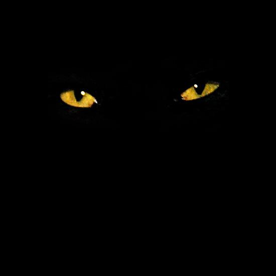 Te voir la nuit