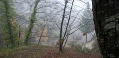 maison brouillard