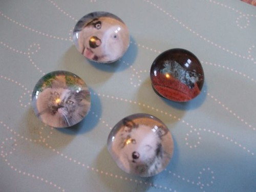Pet Photo Magnets