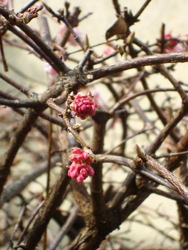 Frühling 02