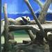 Taipei Zoo Pandas 4