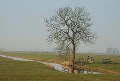 Meadow (Niquitin) Tags: tree netherlands nikon nederland meadow boom weiland naturesfinest niquitin supershot d80 anawesomeshot nederlandvandaag dickbruinsma