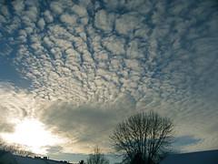 Late afternoon winter sky (MacSmiley) Tags: winter sky sun snow tree clouds southdakota canon horizon january powershot sledding 2008 altocumulus 12208 twtme sd700is jehovahscreation macsmiley