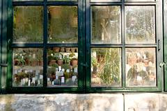 Orto Botanico, Padova (mrcury) Tags: padova ortobotanico