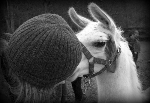 Heather snogs Phil the llama!