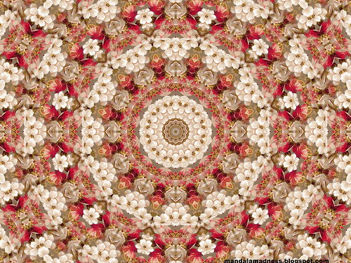 Floral Mandala Desktop Wallpaper