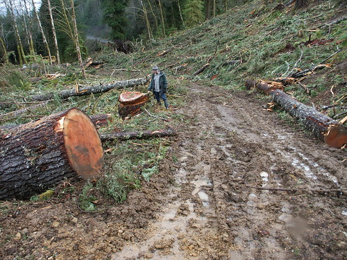 clearcut old growth 1464