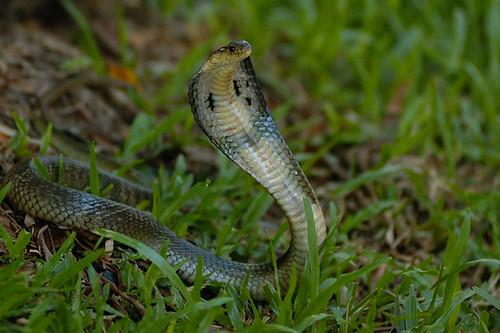 Trại rắn đồng tâm -vietbalo.vn
