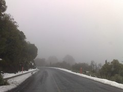 Lake Mountain Snow Chase (wolfcat_aus) Tags: cameraphone road trees cloud mist mountain snow cold weather mobile landscape geotagged drive nokia phone australia victoria smartphone mobilephone vic gps lakemountain 8gb highcountry carlzeiss nseries n95 nokian95 nokian958gb n958gb