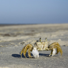 don't worry (shantaya ~ dannie) Tags: blue light sea sky love beach sand bravo searchthebest crab bobmarley bobbymcferrin behappy dontworry naturesfinest flickrsbest abigfave impressedbeauty ocypodequadrata visiongroup citrit atlanticghostcrab onlythebestare life~asiseeit photoexel gettyinvite