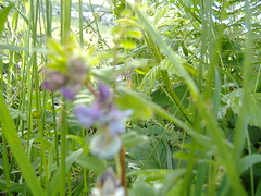 Ireland_0444.jpg (Starman9x) Tags: ireland florafauna