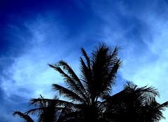 Blue sky behind (jmven) Tags: blue sky tree silhouette azul de island venezuela palm margarita isla