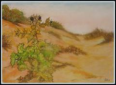 Dune in costa verde (cicipeis) Tags: sardegna ita