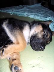 Sweetness (FriaLOve) Tags: blue dog pet baby brown green puppy nose kiss hand sleep balck inside friia frialove