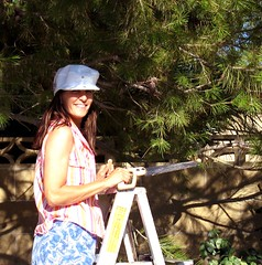 Tree Trimming (Rennett Stowe) Tags: trees shadow woman sunlight tree girl smile hat pinetree female work happy saw women shadows working brickwall wife ladder limbs brunette cinderblock pinetrees pruning treetrimming sawing ripsaw treelimbs brightsun whitehat italianamerican outsidework nicesmile sunintheface trimmingtrees smilingwoman blueshorts blockwall stripedtop handsaw treetrimmer onaladder cinderblockwall shadeandsun frenchhat backyardwork climbingaladder brunettewoman treepruning sawingtrees trimmingpinetrees womanonaladder shadeofthetree smallsaw pruningbranches personwithahandsaw girlwithahandsaw