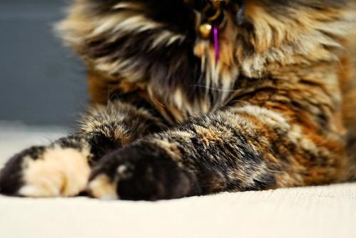 ..furry feet..