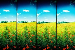 The Invitation... (Trapac) Tags: uk red summer england green film field yellow four countryside lomo xpro lomography crossprocessed supersampler graphic kodak turquoise 4 country meadow slidefilm plasticfantastic poppy poppies grasses remembrance elitechrome 2008 poppyfields watford plasticcamera lestweforget remembering 166 100iso kodakelitechrome wmh omo supersamplerroll19 flickrcollectionongetty tracypackerphotography wwwtracypackercom