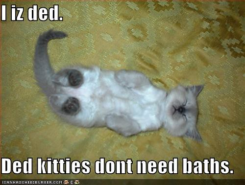 funny-pictures-kitten-avoids-bath-plays-dead