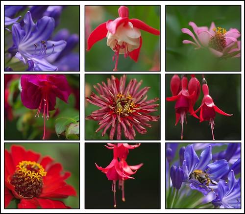 Biodiversity_2 por KurtFML.