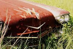 (illinichick357) Tags: old abandoned car rusty utata carboneyard