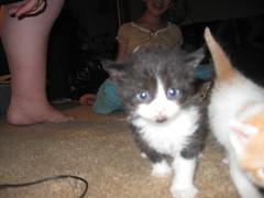 kittens 056