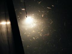 Underwater Sea Life - DSCF2261