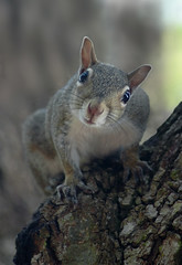 Tell Me About It (lynne bernay-roman) Tags: hello animal squirrel looking perched soe brazen potofgold blueribbonwinner supershot mywinners impressedbeauty nginationalgeographicbyitalianpeople alittlebeauty confrontive