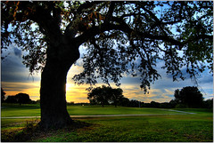 12 hours of Fun (Extra Medium) Tags: sunset tree scenery texas peace searchthebest golfcourse vosplusbellesphotos newbrunfels
