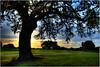 12 hours of Fun (Extra Medium) Tags: sunset tree scenery texas peace searchthebest golfcourse vosplusbellesphotos newbrunfels