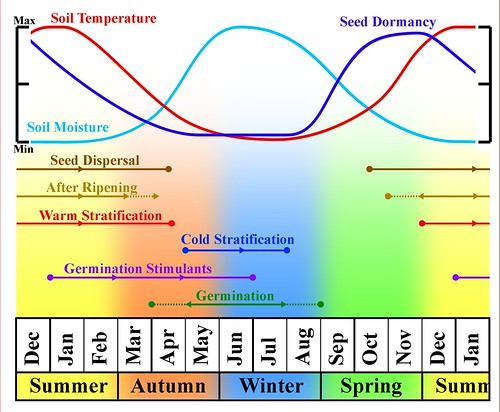 Dormancy and Germination Cycle