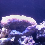 just got stung pretty good by this coral. thumbnail