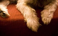 I love sus patitas (Mara Baixauli) Tags: dog sexy cane pose sony rocky can perro pelo pata patitas pelitos piececito sonyalpha100 paturria matapelo