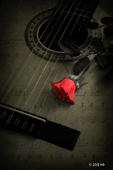 guitar (Mariusz Petelicki) Tags: textura rose guitar gitara róża littlestories canon400d picswithsoul mariuszpetelicki