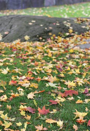 Autumn Colours 08 -1