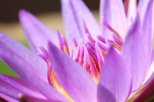 紫。。。咲く!
