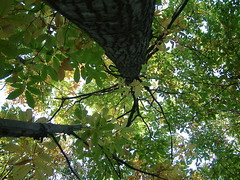 Relax (*** Bruna ***) Tags: nature foglie alberi natura tronco autunno bosco gmt tronchi castagno appenninoromagnolo forestecasentinesiedintorni