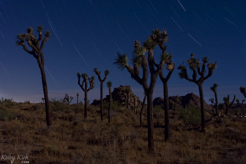 Joshua Trees at Night