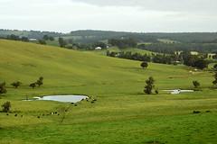 landscape (dalinean) Tags: flower green landscape sigma australia wildflower sd10 westaustralia wildflowerseason