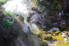 Lots of brightly coloured moss (peterjwaldeck) Tags: newzealand taupo hawkesbay cratersofthemoon