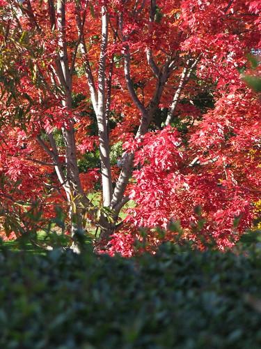 NC Foliage II