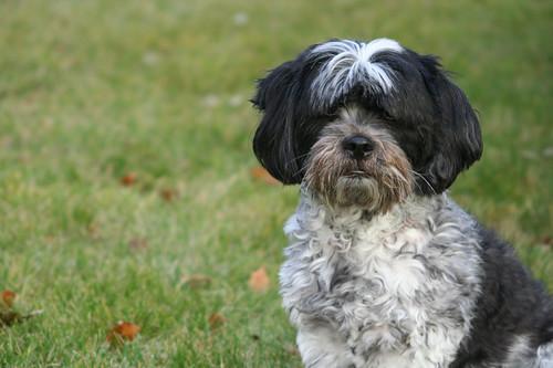 doggie, I love