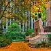 University Of Washington Fall Foliage